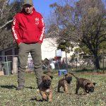 PROFESSIONAL DOG TRAINING CANBERRA